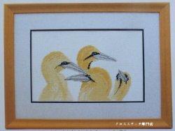 画像1: 鳥 ウミドリ