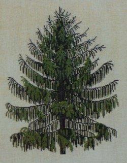 画像1: 針葉樹 sørgegran