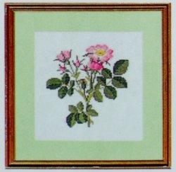 画像1: バラ科の花