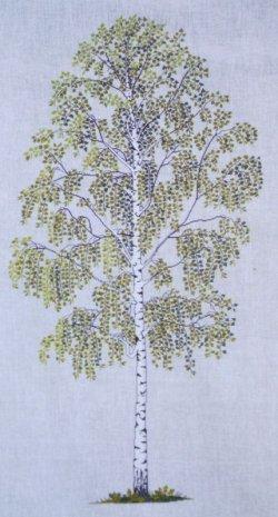 画像1: 白樺の木