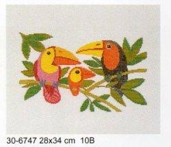 画像1: 小鳥 バード